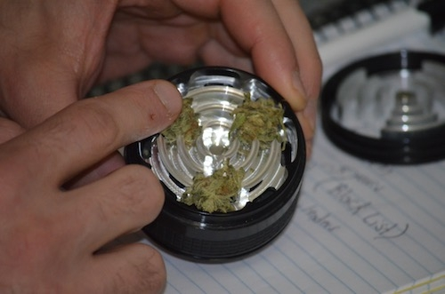 grinding-dry-herbs-into-kief